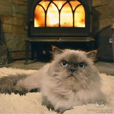From @rukasthecat: Cozy and fluffy near the fire #catsofinstagram [source: http://ift.tt/1NW4jSp ]