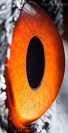 Animal eyes 2 by Suren Manvelyan, via Behance