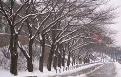 [Winter] Seoul Grand Park Subway line no. 4. Seoul Grand Park station, exit 1, 2, 3