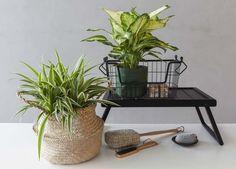 Hvorfor ikke ta platene med inn på badet? Der er de med på å skape en følelse av spa og velvære. Planters, Plant, Window Boxes, Pot Holders, Flower Planters, Pots