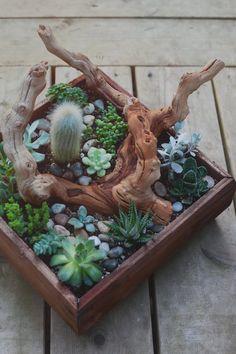 cactus & succulent center pieces // Jane in the Woods Photographie