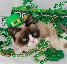 photo of cat dressed for St. Patrick's Day - Google Search