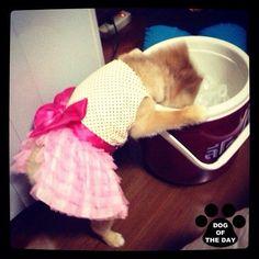 """DOG OF THE DAY  @nwhann Jun.14,2012 """