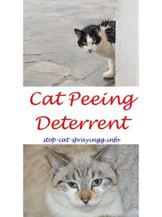 Keeping Your Cat Healthy All About Caring For Your Pet