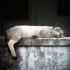 """""""You become responsible, forever, for what you have tamed."""" --Antoine du Saint Exupery Please adopt. I Love Cats, Cute Cats, Funny Cats, Cat In Heat, Curious Cat, Cat Boarding, Cat People, Cat Sleeping, Beautiful Cats"""