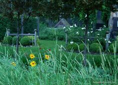 The Rudbeckias are just beginning to flower in the 'wildflower meadow.'