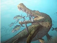 Prehistoric Crocodiles   Prehistoric American Crocodile