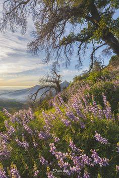 Blossom by Paul Ruji on 500px