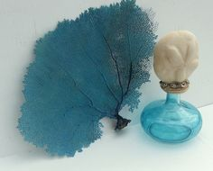 Hand Dyed Natural Sea Fans Available in Four Colors