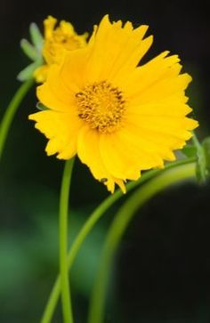 Natural Health Remedies, Healthy Life, Medicine, Home, Palmas, Flowers, The Body, Plant, Embroidery