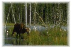 Liard River Hot Springs Provincial Park (Mile 496)