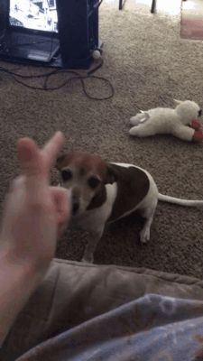 GIF I want to play with you