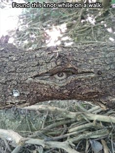 Nature is watching you