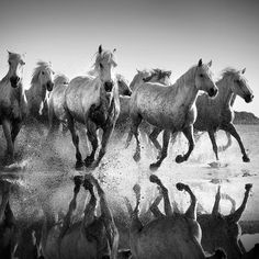 Photo Horses and reflexions - Jonathan Chritchley