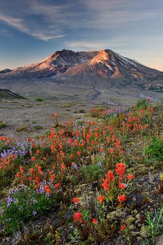 Mt Saint Helens - it has been amazing see life slowly return.  Quite a difference over the years.