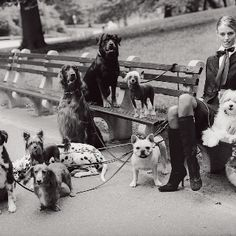 Dogs in Paris. Rottweiler, Irish Setter, Chinese Crested, Dachshund, Dalmatian, Yorkie.