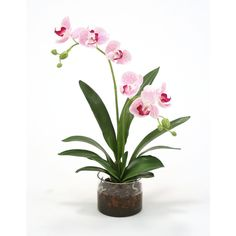 Distinctive Designs Waterlook Silk Phaleanopsis Orchids in Cylinder... ($40) ❤ liked on Polyvore featuring home, home decor and distinctive designs