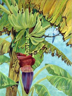Banana Tree Canvas Print - Little Blue Quaker by Danielle Perry Danielle Perry, Tropical Art, Tropical Paintings, Palm Tree Paintings, Banana Art, Banana Flower, Hawaiian Art, Fruit Painting, Fruit Art