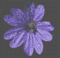 click here to view larger image of Dew Flower (chart)