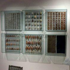 Museum Showcases, Museum Display Case