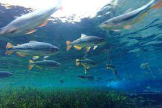 O Rio Sucuri, com suas águas cristalinas, nasce na Fazenda São Geraldo, local que oferece a flutuação. É preciso percorrer uma trilha leve de 400 metros até a nascente, em um caminho muito agradável. A luz solar incidindo sobre a água propicia a visualização de uma cor azulada encantadora.  Veja dicas de Bonito: http://www.guiaviagensbrasil.com/blog/7-motivos-para-conhecer-bonito-ms