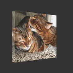 http://www.zazzle.com/bengal_cat_kiss_gallery_wrapped_canvas-192476159259884263?gl=FlaminCatDesigns=238739306683447883  Bengal Cat Kiss Gallery Wrapped Canvas by FlaminCatDesigns
