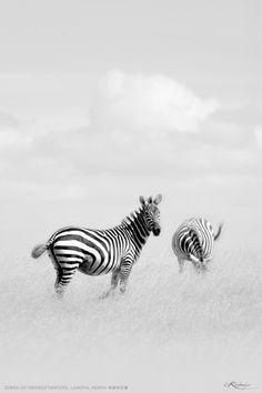 The Stripes : High-keyed by Kulmiye Chan