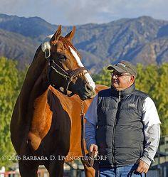 Barbara Livingston @DRFLivingston  8h8 hours ago Champion CALIFORNIA CHROME, with Alan @ShermanRacing , at @santaanitapark.  He returns tomorrow in San Pasqual.