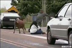 Illegaler Straßenkampf.. :]   Lustige Bilder, Sprüche, Witze, echt lustig