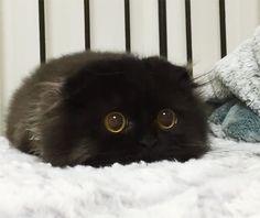 Les grands yeux étonnés de ce petit chat vont vous faire craquer ! Adorable...