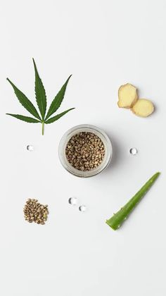 Creative photo shooting for social media. This elegant photographs and short form videos talk about hemp's products composition and benefits. Inspired by a green and minimal universe this smart content creation is very fresh and contemporary. #låpsüs #socialmedia #fresh #graphic #green #hemp #contentcreation #stopmotion #animation #herb #cannabis #beauty #cosmetics Stop Motion Photography, Video Photography, Beauty Photography, Creative Photography, Cannabis, Satirical Illustrations, Minimal Photo, Short Form, Motion Video