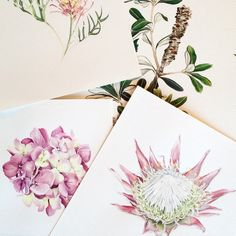 Floral portraits by Pip Spiro
