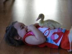 Adorable duckling! Be sure to vote in the Pet Contest on our blog and Facebook by 4/25!