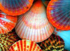 Tie Dye Shells