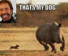 Chuck Norris Dog... Stuart just died.  Seriously.