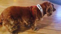 Een Cocker Spaniel is officieel benoemd tot de mascotte van Charlie Hebdo. De hond kreeg de titel na verhalen van overlevenden van de aanslag. Volgens ...