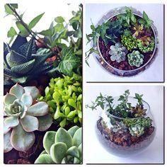 Özel günlerinize renk katmak sizin elinizde..Yeşil Atölye en güzel bitkileri ve arajmanları ile sizlerle✌️☺️ Bilgi ve siparişleriniz için bizlere ulaşmayı unutmayın  (Not: Profilimizde yayınlanan tüm fotoğraflar bize aittir.)
