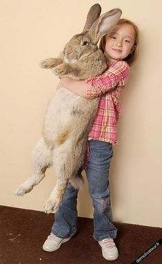 Very big rabbit