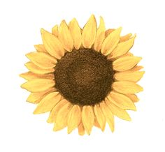 sunflower tattoo... definitely want this to be my first tattoo!