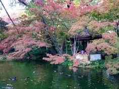 The Japanese Garden at Fort Worth Botanical Gardens. Beautiful.