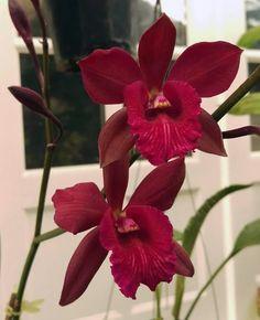 Orchidée <3 ***