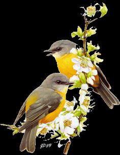 Animated Gif by Beautiful Gif, Beautiful Birds, All Birds, Love Birds, Vogel Gif, Animals And Pets, Cute Animals, Bird Gif, Flowers Gif