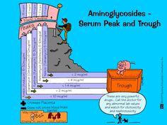 Aminoglycosides - Serum Peak and Trough