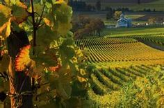 Oregon. Wine Country in Willamette Valley