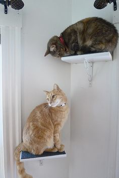 DIY cat perches | Foxflat's Blog
