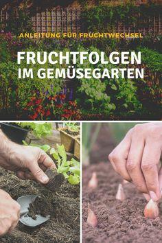 Warum lohnt sich die Fruchtfolge im Gemüsegarten? Eine abwechslungsreiche Fruchtfolge ist die Voraussetzung für eine gute Ernte im Gemüsebeet und einen gesunden Boden. Hier bekommst du eine Anleitung für den Fruchtwechsel in deinem Gemüsegarten: #fruchtfolge #fruchtwechsel #gemüsegarten #gemuese #boden #erde #schädlinge #krankheiten #gesund #bio #nachhaltig #garten #beet #hochbeet #garta #anbauplan #tipps #ideen #inspiration Bonsai, Gras, How To Dry Basil, Inspiration, Green Lawn, Crop Rotation, Harvest, Plants, Tutorials