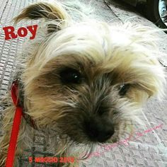 Roy Per sempre FOR EVER