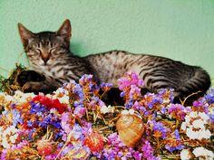 A virágpárnán Ratatouille, Gardening, Ethnic Recipes, Lawn And Garden, Horticulture