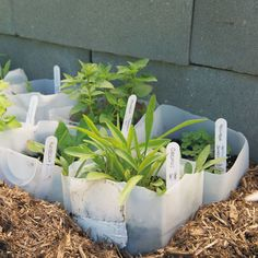 This DIY planter actually lets you start seeds in the winter! The plastic will act as a greenhouse, keeping the soil warm, even if it's snowing.