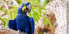 Un guacamayo azul
